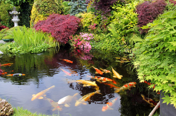 Leeds pond maintenance harrogate garden pond cleaning for Garden ponds uk